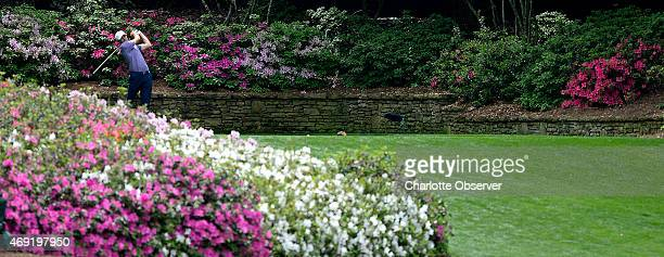 Nestled in the left corner of the 13th tee box Jordan Spieth hits his drive past the blooming azaleas during second round action of the Masters at...