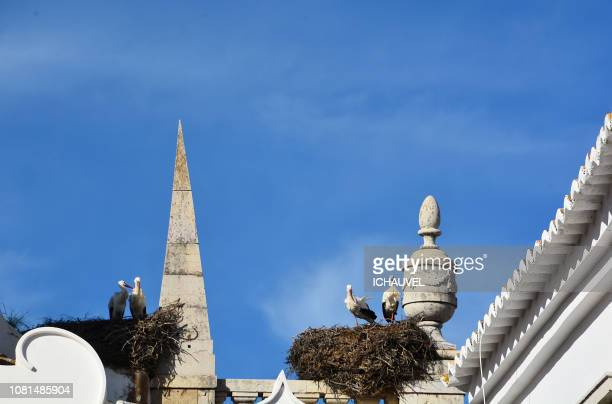 nests of  storks portugal faro - faro city portugal stock photos and pictures
