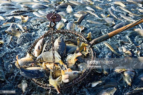 net of fishes