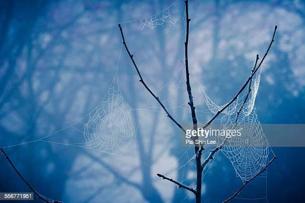 Net on the tree