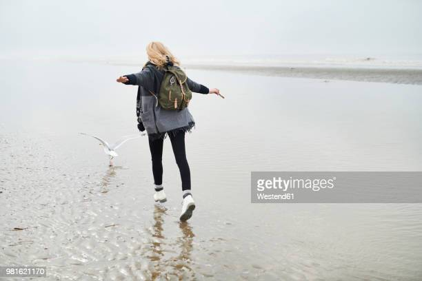 netherlands, back view of young woman with backpack walking behind a seagull on the beach - blond frauen strand stock-fotos und bilder