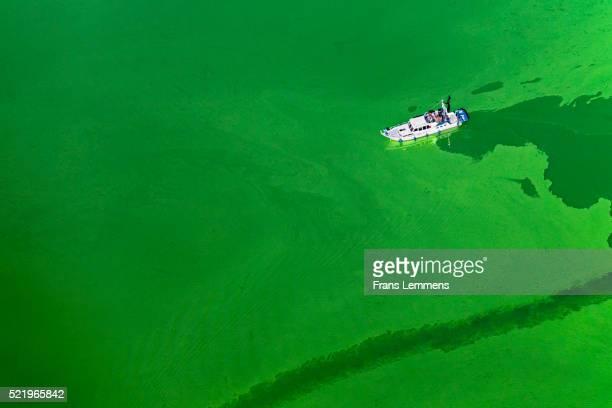Netherlands, Blue-green Algae In Lake