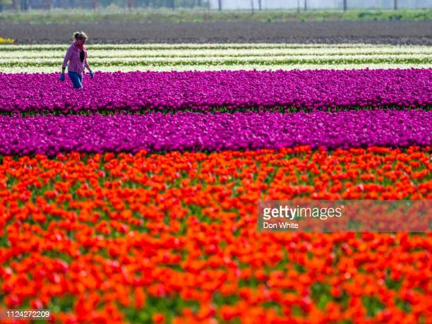 netherlands countryside - decoration stock pictures, royalty-free photos & images