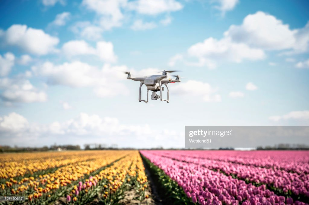Netherlands, drone with camera flying over tulip fields : ストックフォト