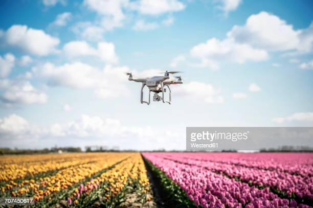 Netherlands, drone with camera flying over tulip fields