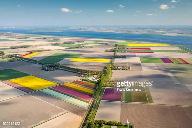 netherlands, flevoland, farmland and flowering tulips - flevoland stockfoto's en -beelden
