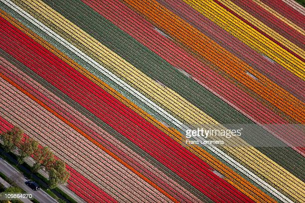 Netherlands, Flowering bulb fields