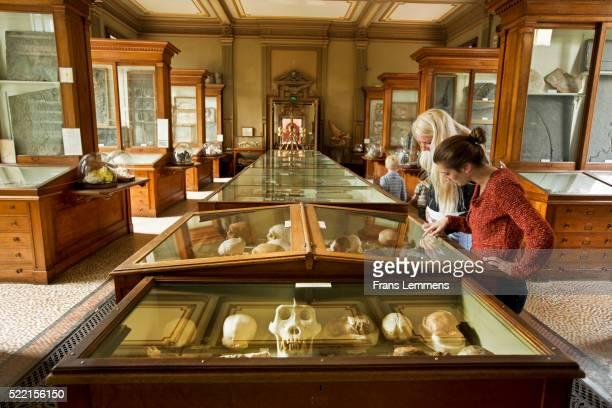 Netherlands, Haarlem, Teylers Museum, Women Look at the Prehistoric Heritage