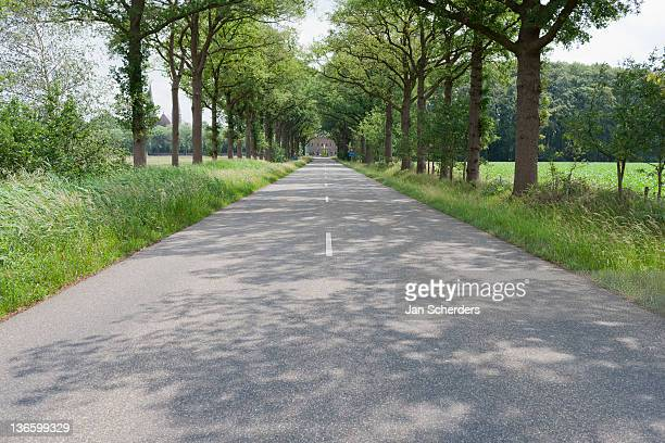 netherlands, north-brabant, tilburg, road lined with trees - absentie stockfoto's en -beelden