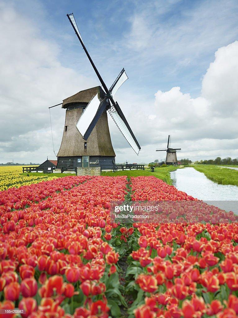 オランダ : ストックフォト