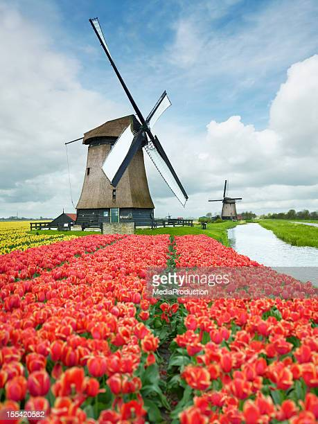 netherlands - amsterdam stock pictures, royalty-free photos & images