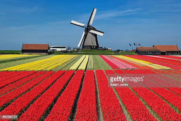 netherlands - netherlands stock pictures, royalty-free photos & images