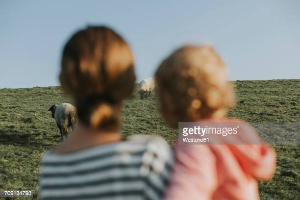 Netherlands, Schiermonnikoog, mother and little daughter looking at sheep on dyke