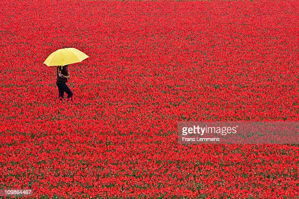 Netherlands, Woman with embrella in tulip field