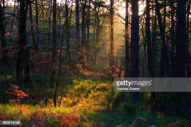 neu wulmstorf,germany - neu stock pictures, royalty-free photos & images