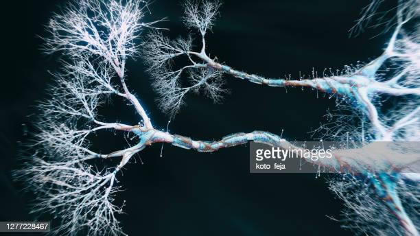 neuron cell close-up view - dendrite stock pictures, royalty-free photos & images