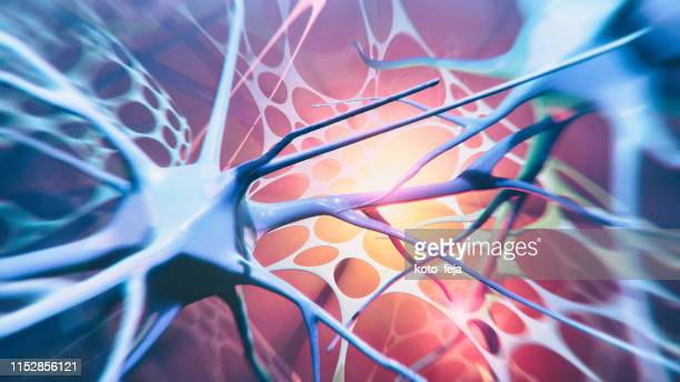 neuron system - human nervous system stock pictures, royalty-free photos & images