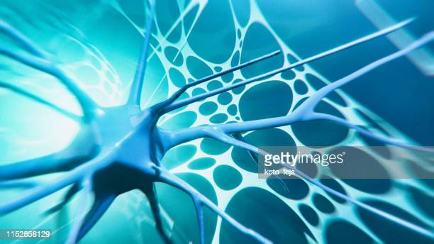 neuron system - nucleus stock pictures, royalty-free photos & images