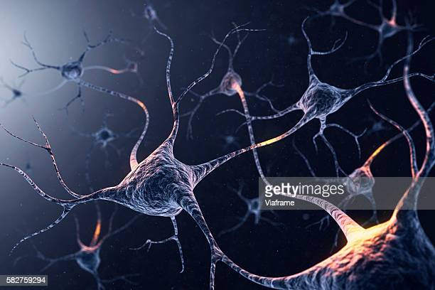 neuron system