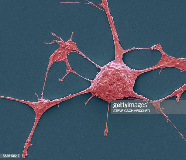 neurone, sem - sem stock pictures, royalty-free photos & images
