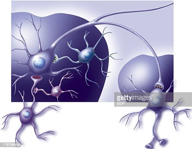 Neurons Of The Brains CloseUp View Of The Neurons Of The Brains Ventral Tegmental Area Vta And The Nucleus Accumbens Ventral Tegmental Area Dopamine...