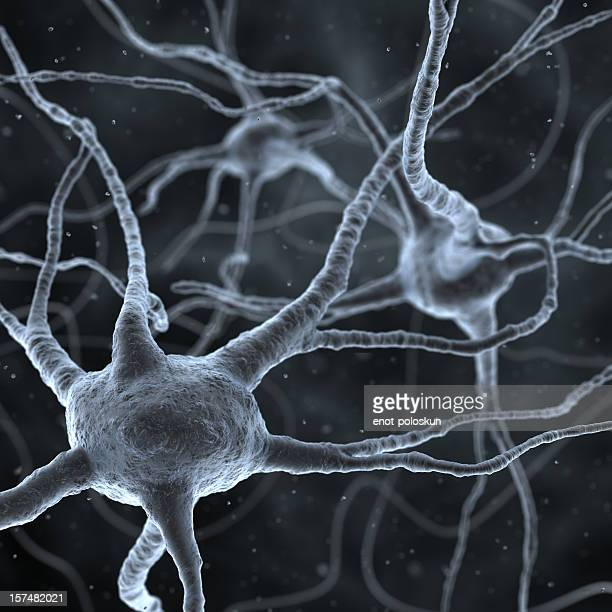 neurons - neurons stock photos and pictures