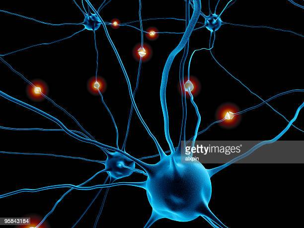 neurons - biomedical illustration stock pictures, royalty-free photos & images