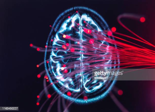 neuroscience, fibre optics carrying data around the brain - neuroscience stock pictures, royalty-free photos & images