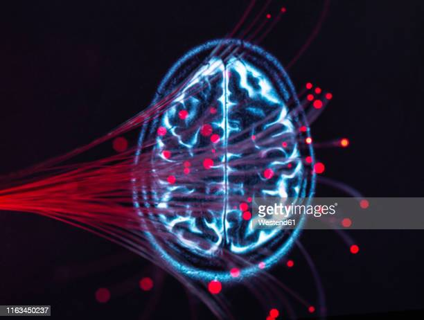 neuroscience, fibre optics carrying data around the brain - tomography stock pictures, royalty-free photos & images