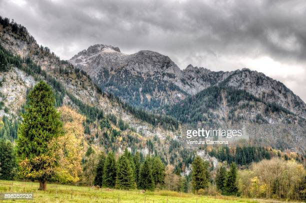 Neuschwanstein Castle in the Alps near the Village of Hohenschwangau, Germany
