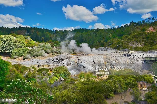 Neuseeland Sinterterrassen und Geysire im Whakarewarewa Thermal Reserve dem bedeutendsten Thermalgebiet im Raum Rotorua