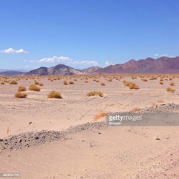 USA, Nevada, Desert landscape