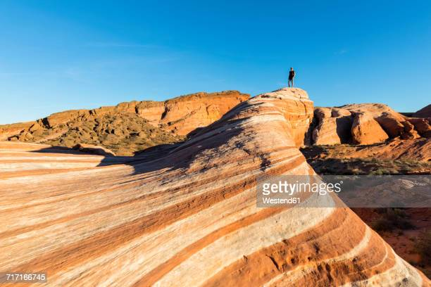 usa, nevada, valley of fire state park, colored sandstone and limestone rocks, tourist at the fire wave - valley of fire state park stock photos and pictures