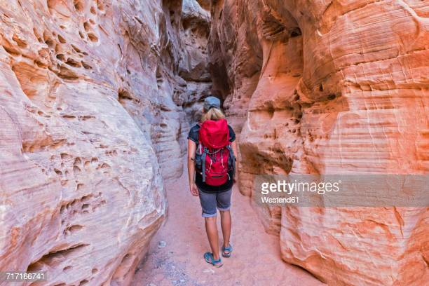 USA, Nevada, Valley of Fire State Park, sandstone and limestone rocks, tourist in narrow passageway