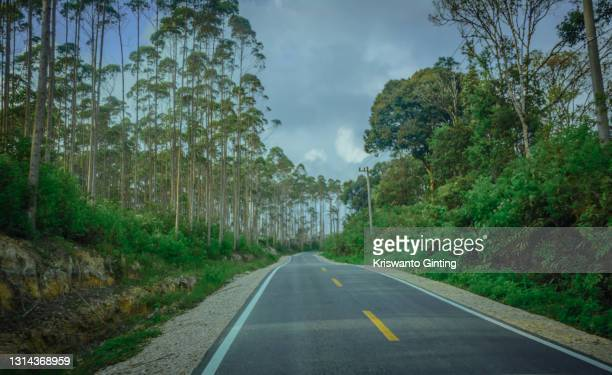 new asphalt road among eucalyptus forests - batemans bay stock pictures, royalty-free photos & images