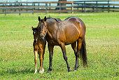 New Baby Equine Horse