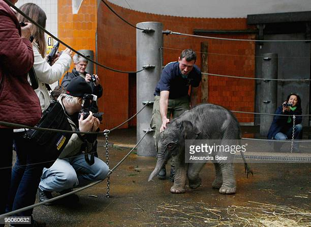 New born elephant Jamuna Toni is presented to the media at Hellabrunn zoo on December 23 2009 in Munich Germany The female baby elephant was born on...