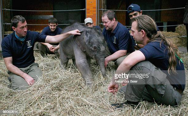 New born elephant Jamuna Toni plays with her keepers at Hellabrunn zoo on December 23 2009 in Munich Germany The female baby elephant was born on...