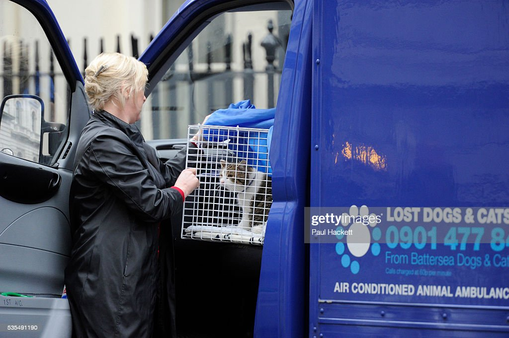 UK - Anilmals - Larry the Downing Street cat arrives : ニュース写真
