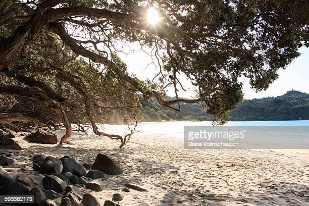 New Chums Beach Coromandel NZ