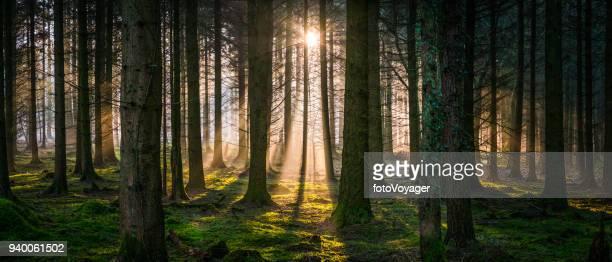 Nieuwe dag aanbreekt in idyllische woud gouden licht bos panorama