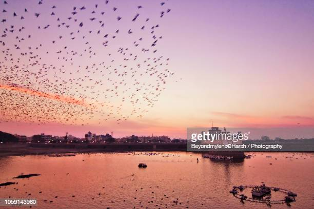 a new day has come. - gujarat stock pictures, royalty-free photos & images