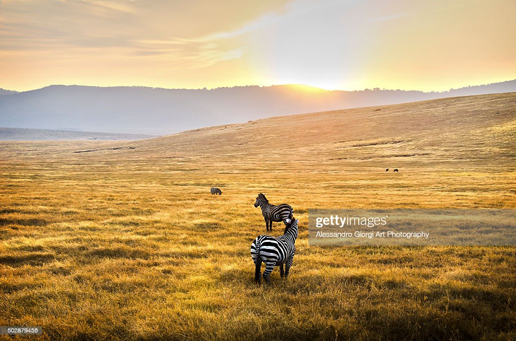 A new day : Foto stock