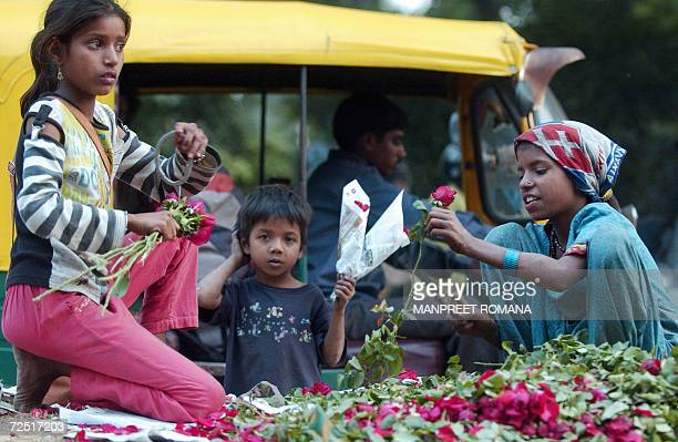 Indian streetchildern sort roses at a traffic light before selling them in New Delhi 13 November 2006 on the eve of Children's Day Universally...