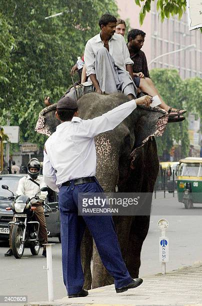 A New Delhi traffic policeman stops an elephant at a busy intersection in New Delhi 06 August 2003 An estimated 33000 elephants are left in India and...