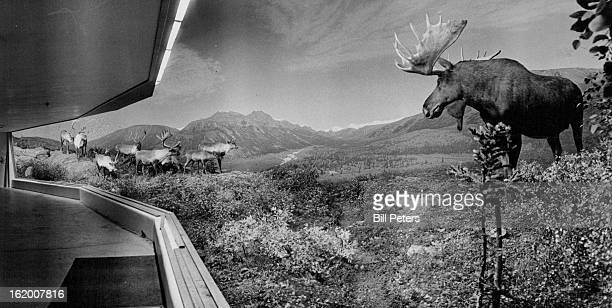 AUG 8 1978 New Diorama At Museum Of Natural History The biggest mostdetailed tundra scene ever created at a naturalhistory museum has been completed...