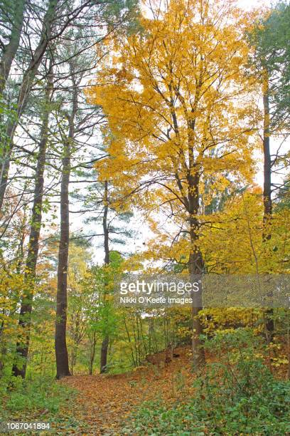 new england in autumn - wellesley massachusetts stock pictures, royalty-free photos & images