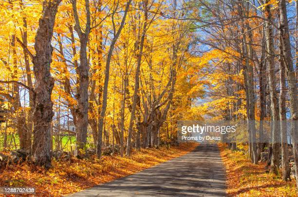 New England, Indian Summer, East, New Hampshire, alley in fall near Sugar hills.