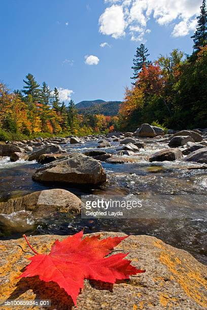 usa, new england, new hampshire, kancamagus highway, swift river and trees in autumn - río swift fotografías e imágenes de stock