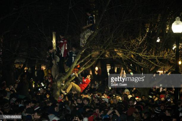 New England Patriots fans climb a tree while celebrating after the New England Patriots beat the Los Angeles Rams in Super Bowl LIII on February 3...